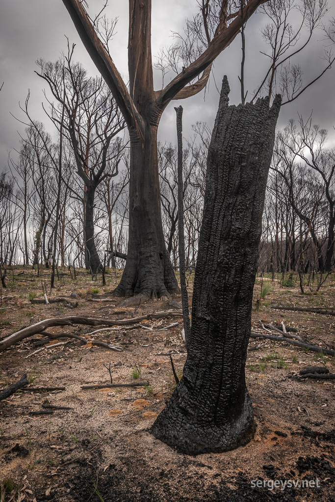 Bushfires really did a number on this place, though.