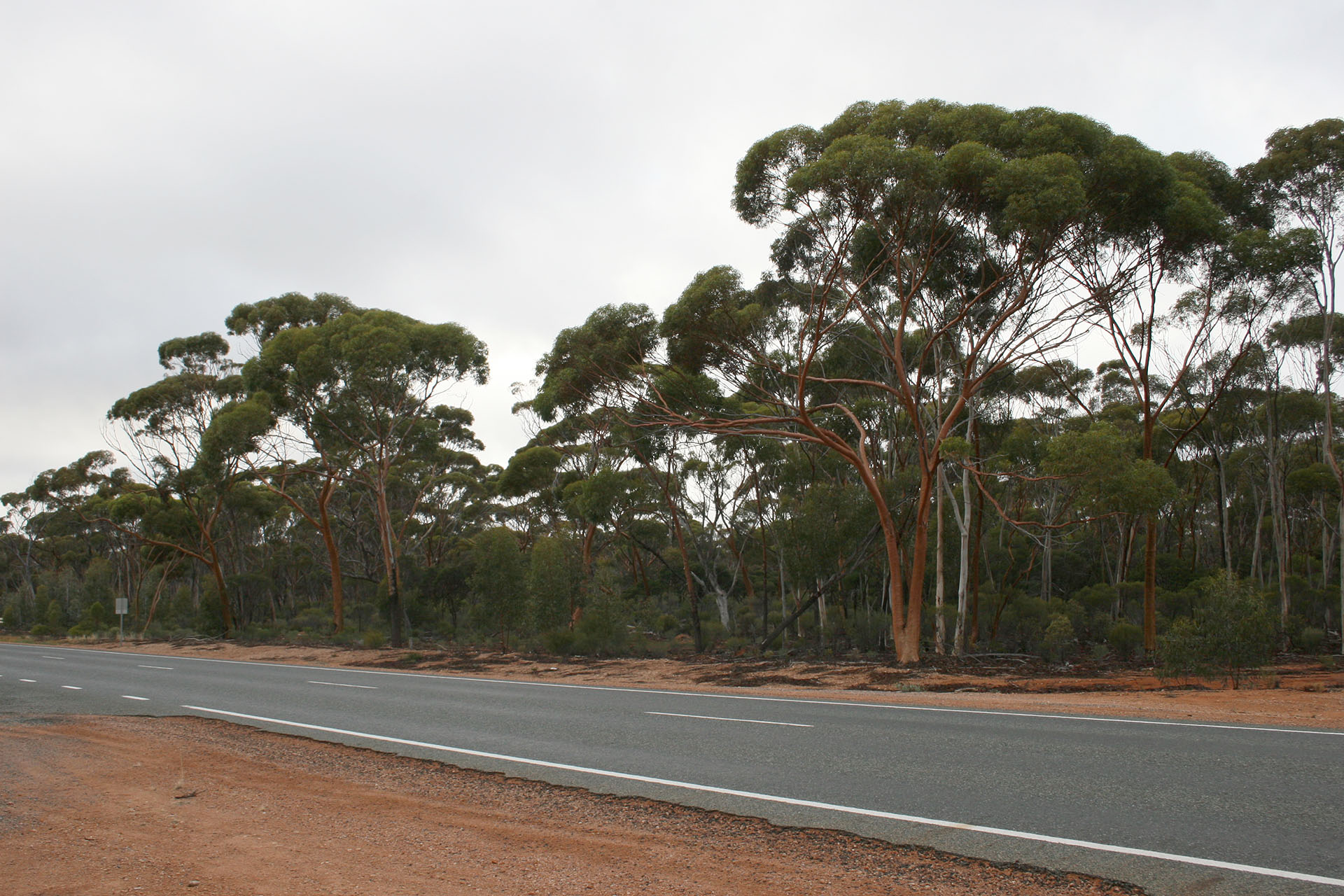 The local woodlands and the red gums.
