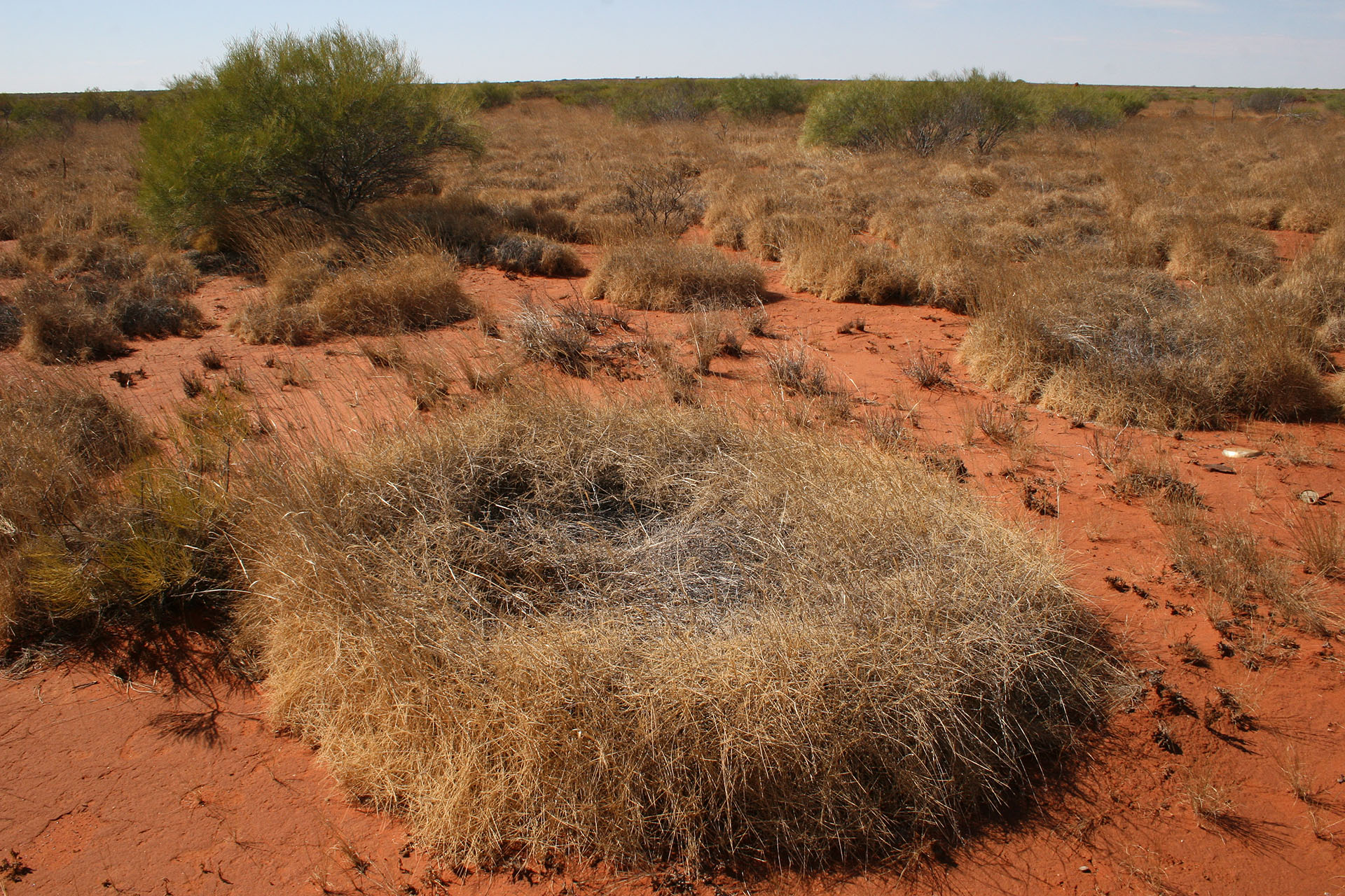 Dry grass is coiled into these circular shapes.