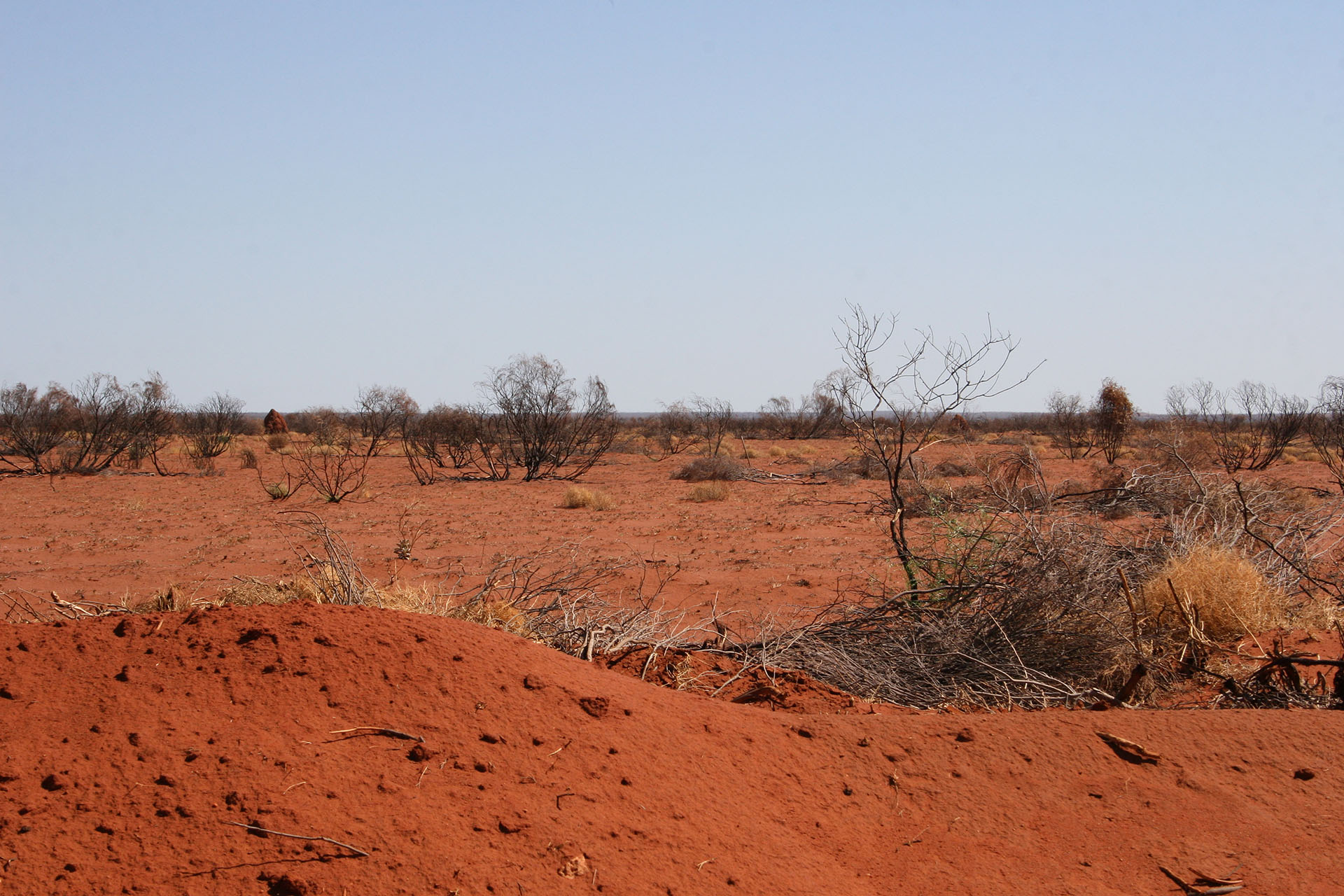 Red desert and termite mounds far ahead.
