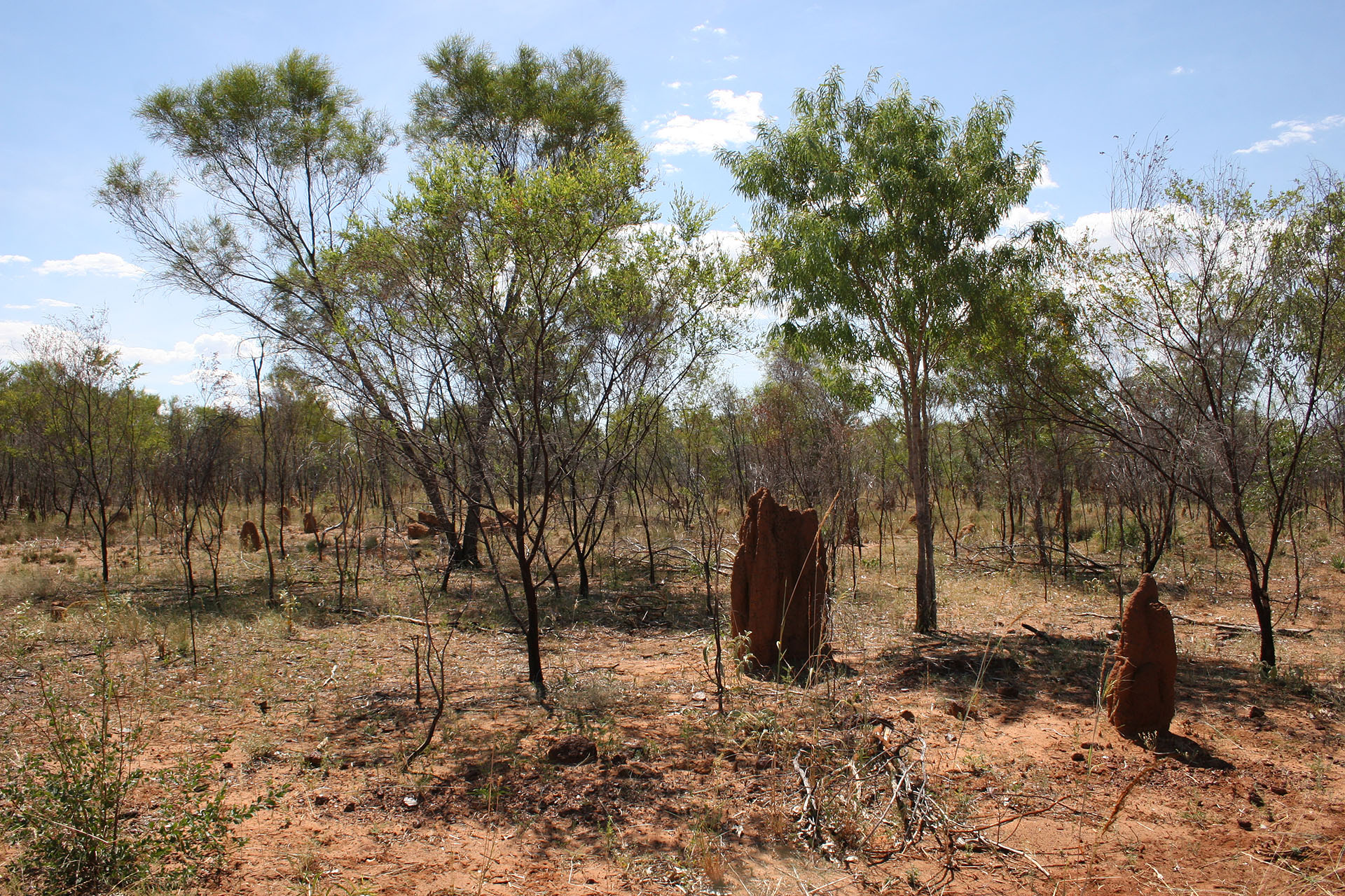 These termite mounds don't look like dinosaur dung anymore, but rather like <a href=