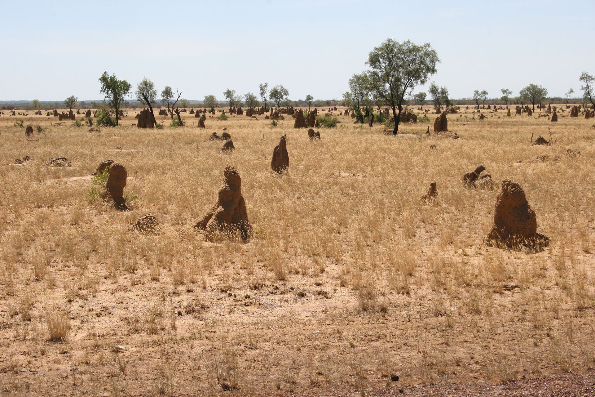 Termite mounds galore.