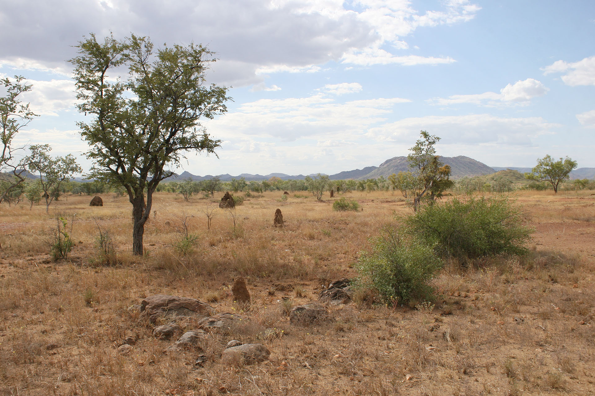 A typical Kimberley landscape.
