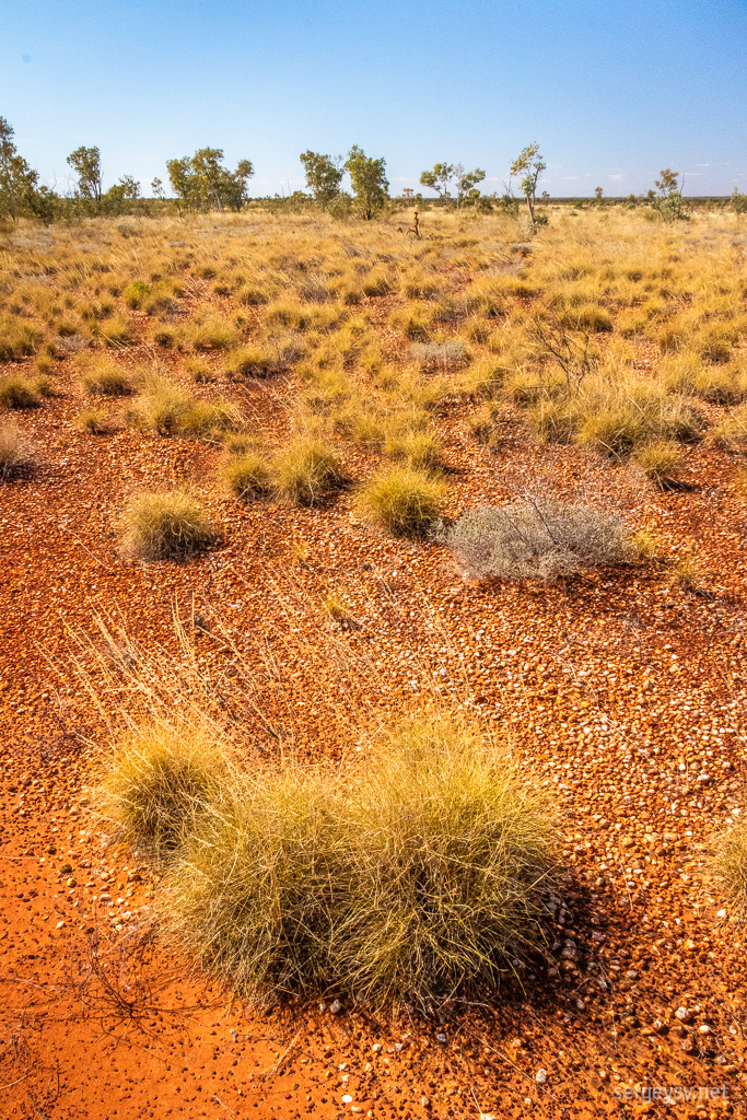 Clumps of spinifex.