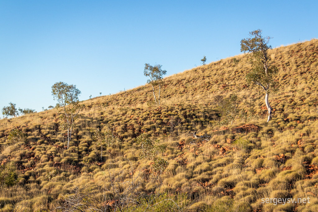 The rim of the crater is covered in spinifex and ghost gums.