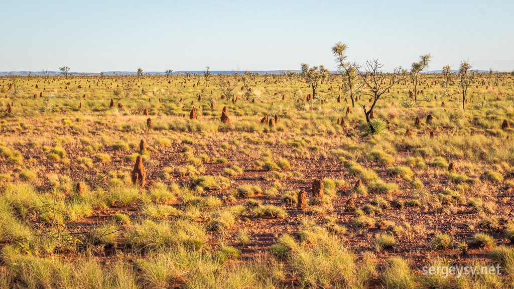 The morning amidst the termite mounds.