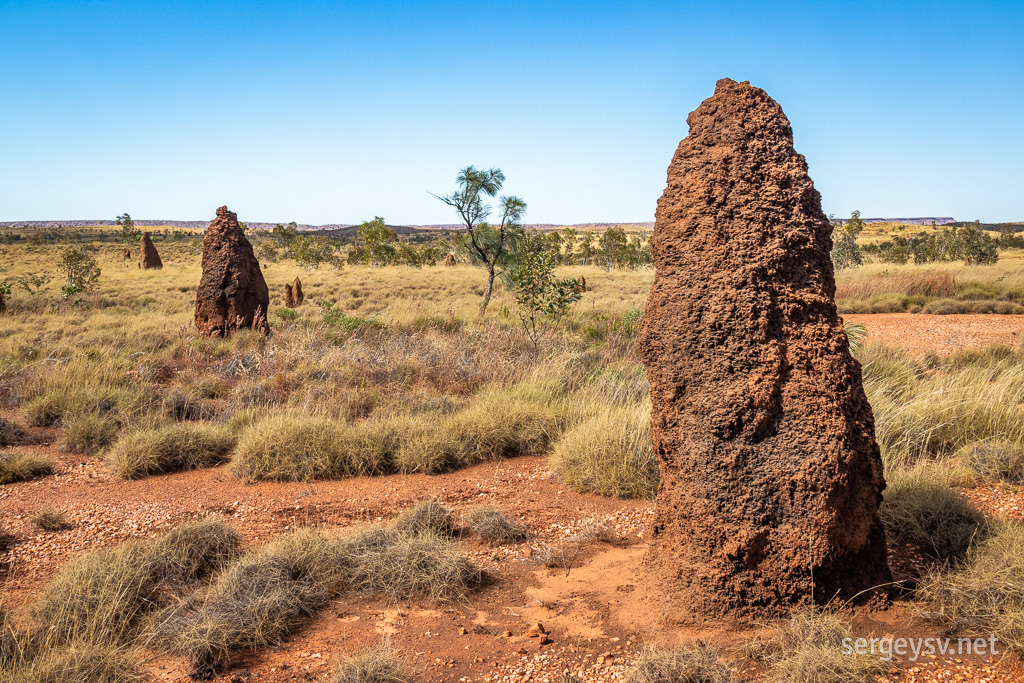 Now <i>these</i> are some proper termite mounds.