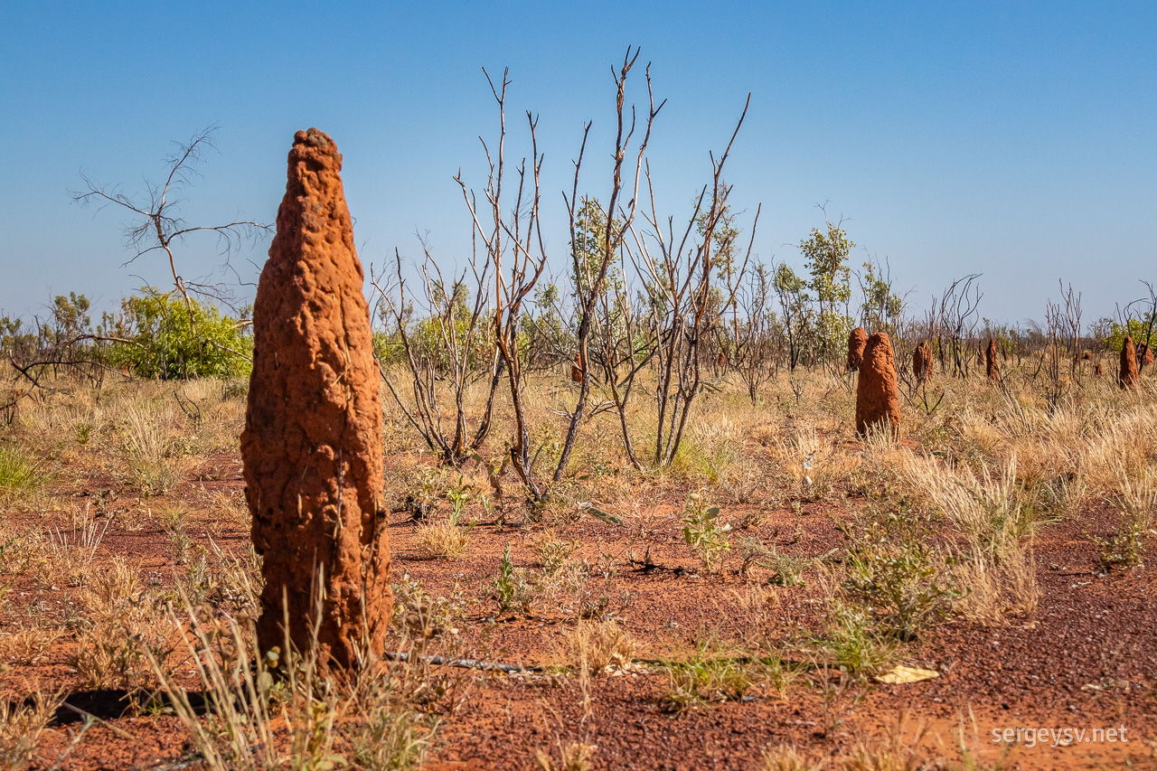Love the red desert. And the termite mounds, of course.