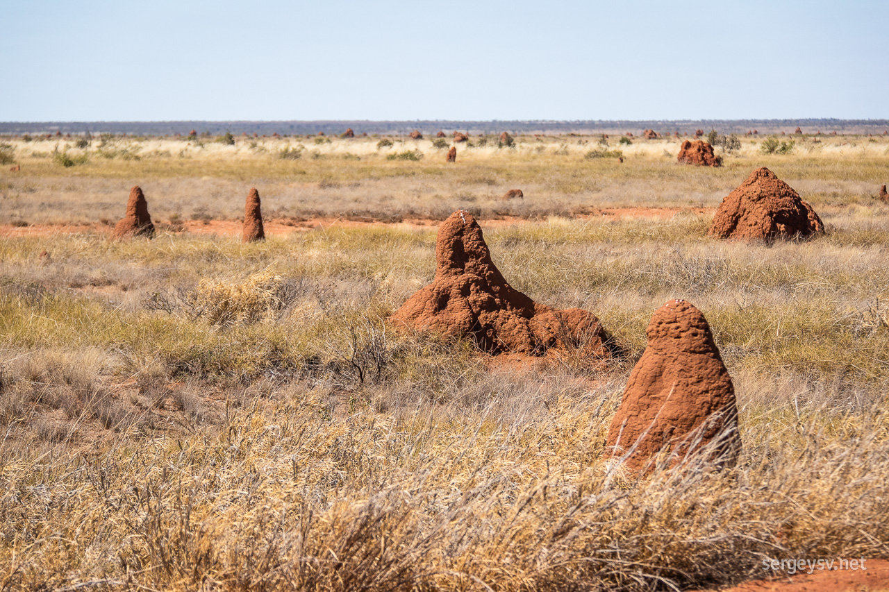 The termite mounds are getting few and far between.