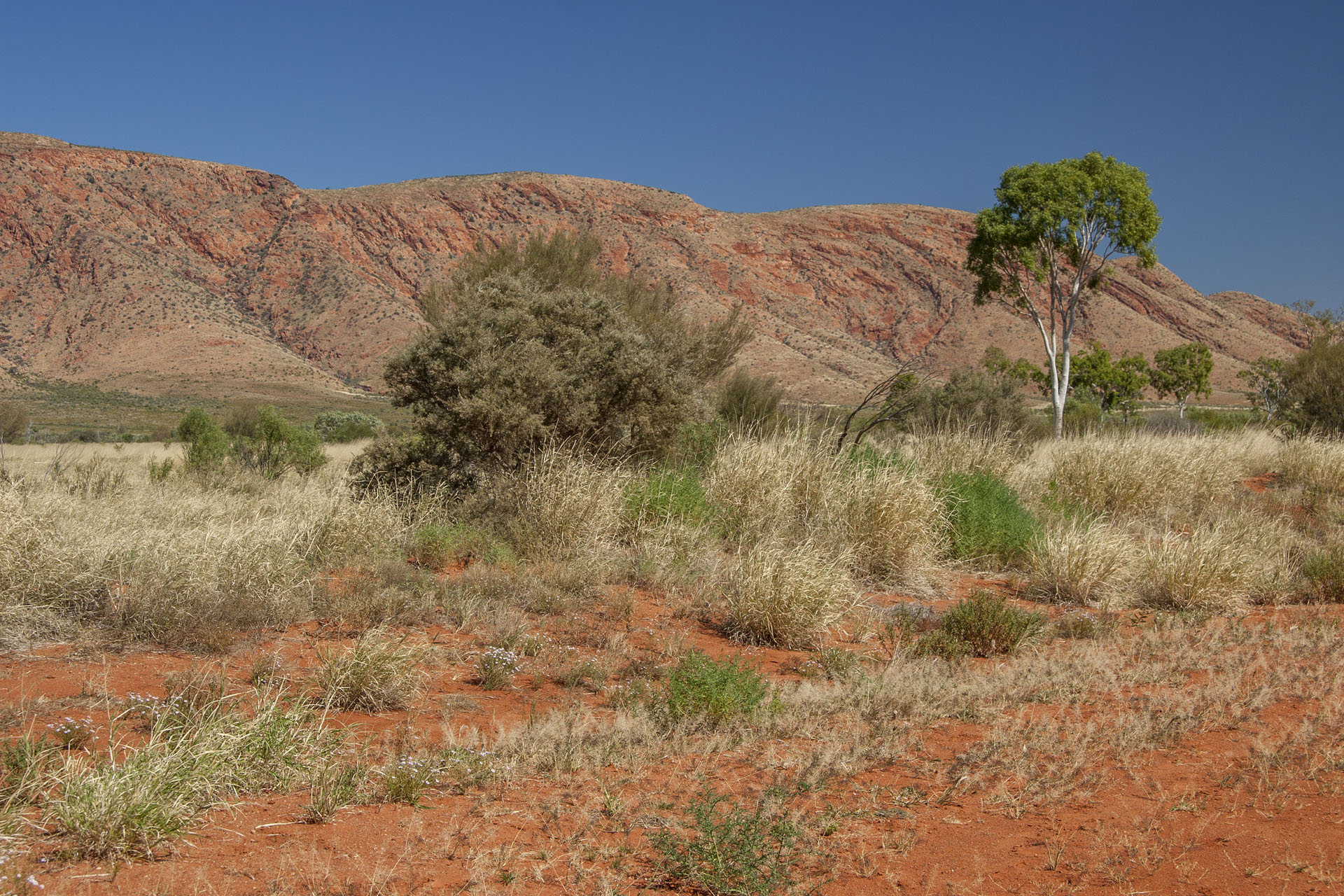 Petermann Ranges.