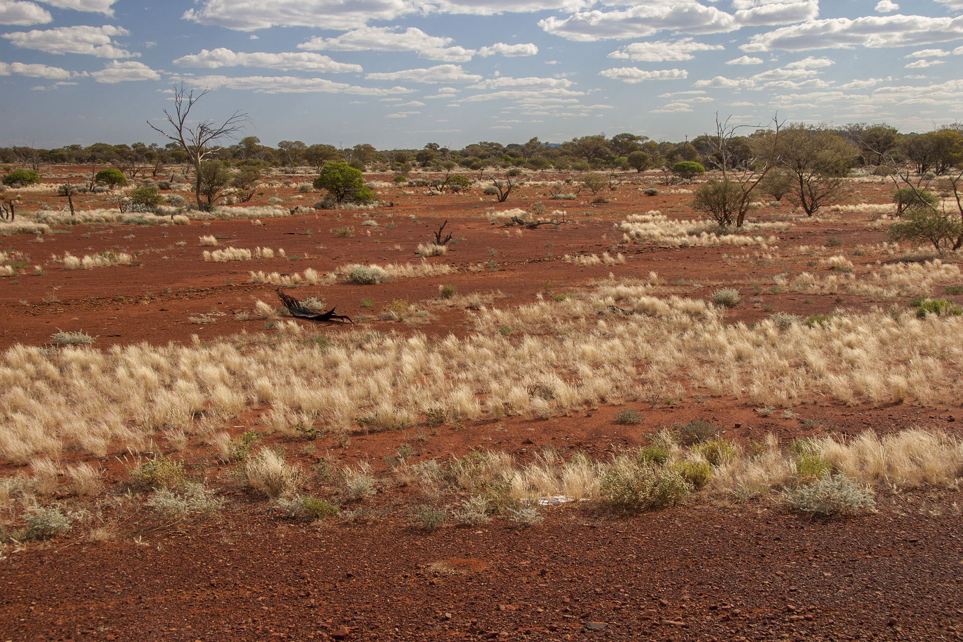 Deep red soil and golden spinifex: Pilbara is close.