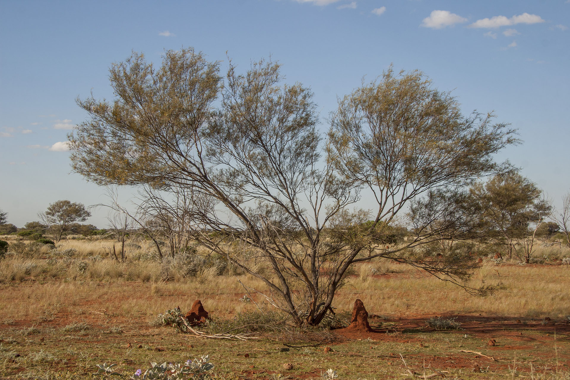 The roadside termite mounds: it's time for them already.