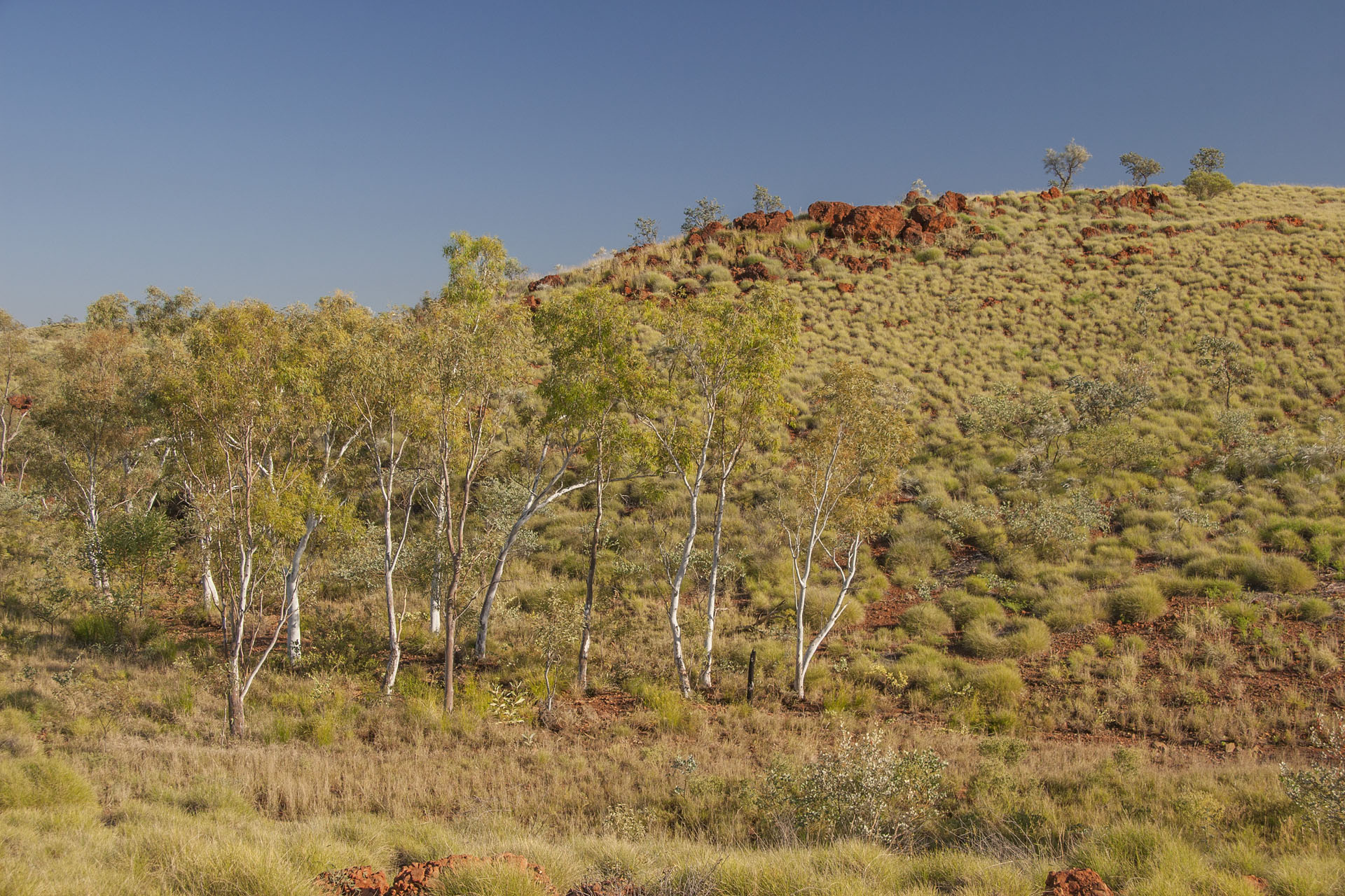 Weathered ranges and ghost gums.