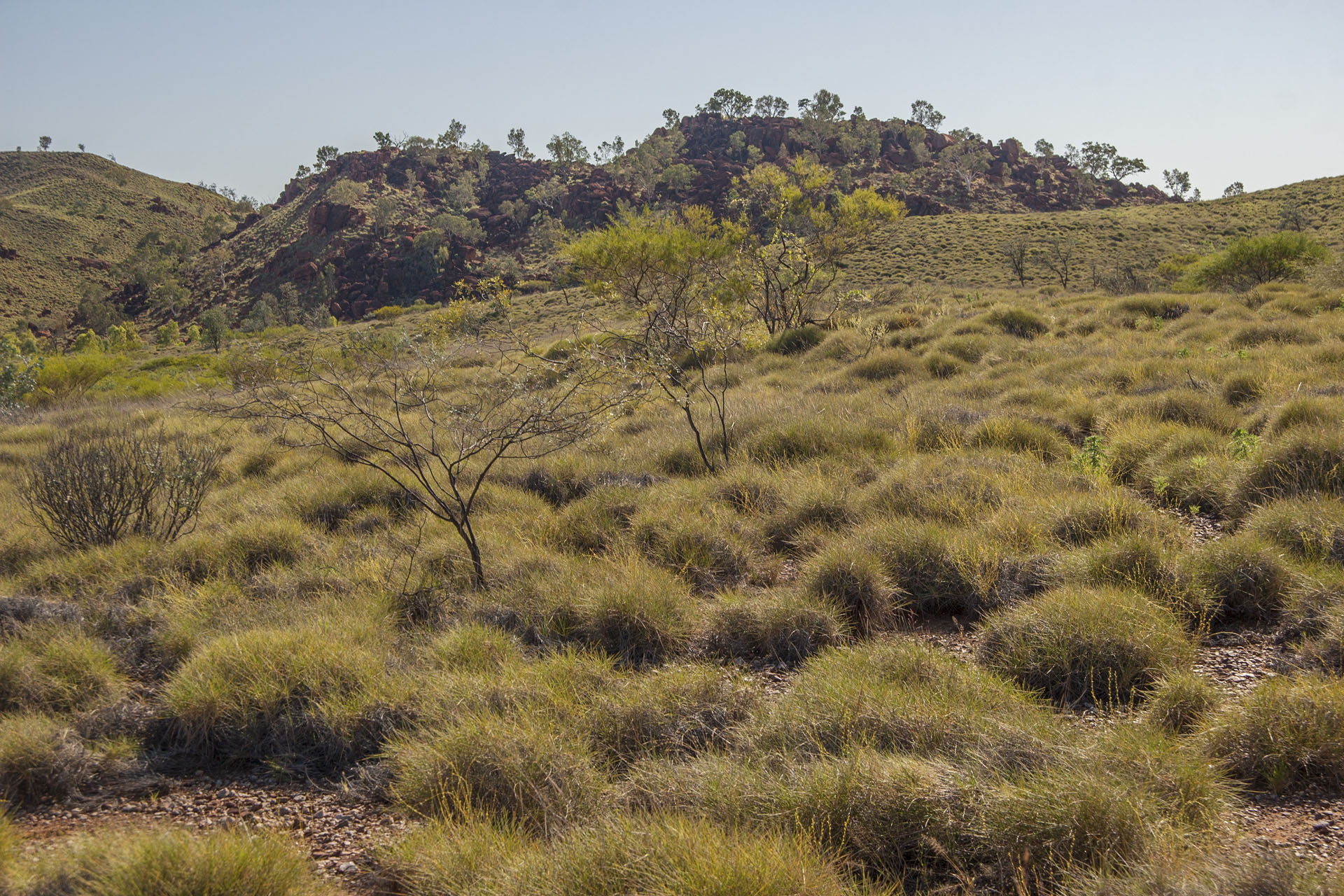 Spinifex, trees, hills.
