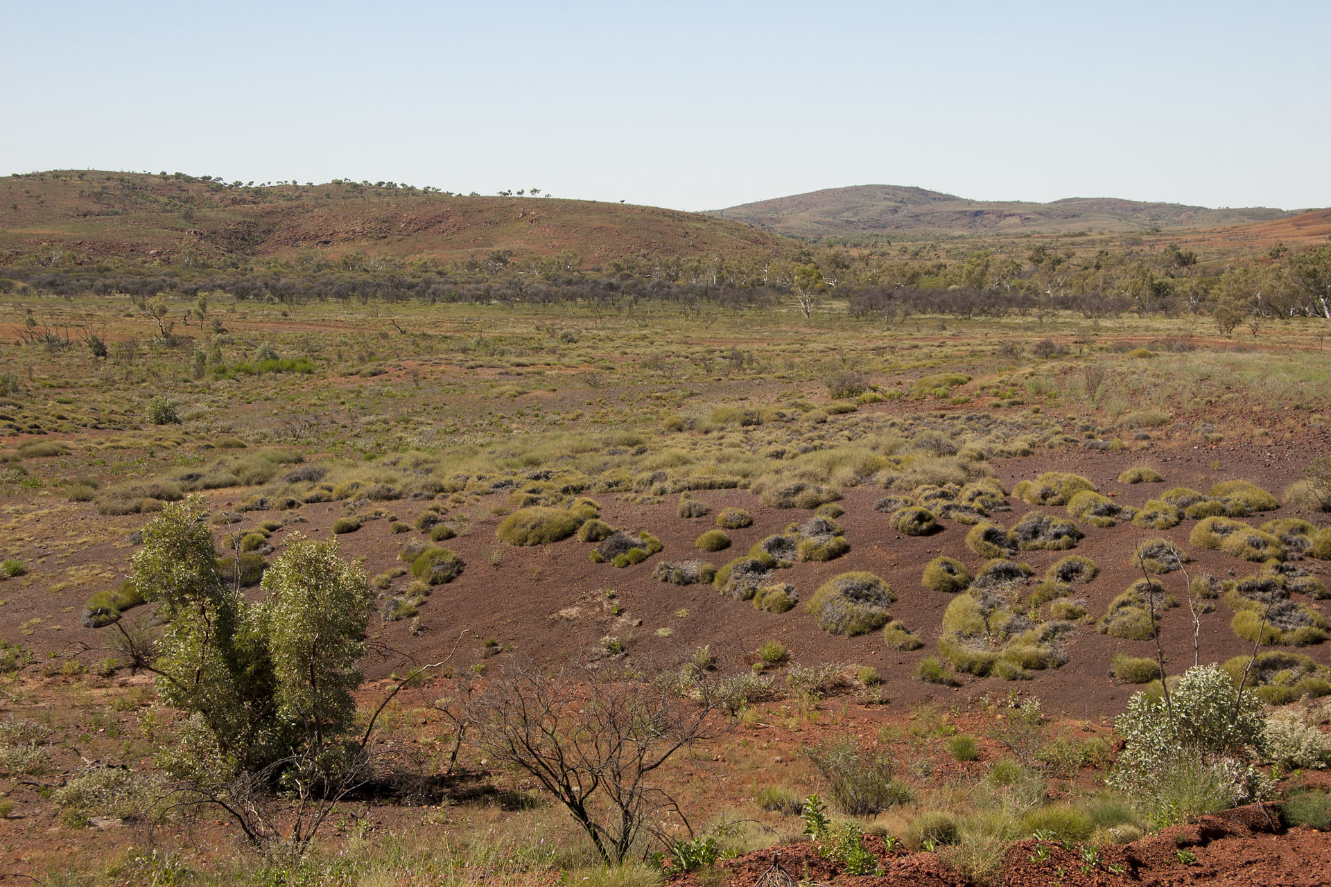 Purple soil and spinifex.