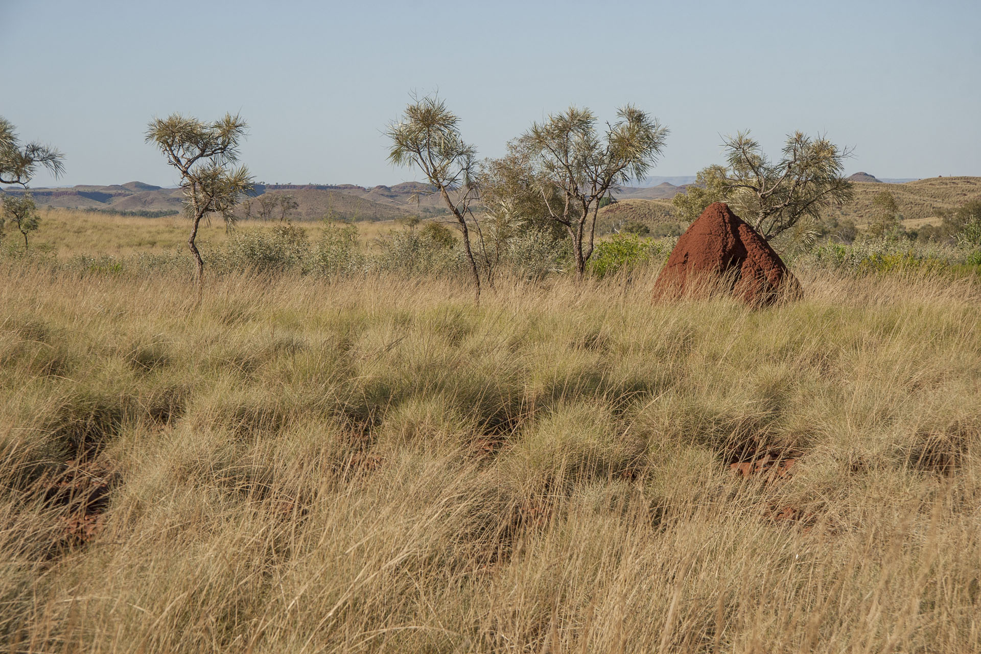 Did I say I love termite mounds?