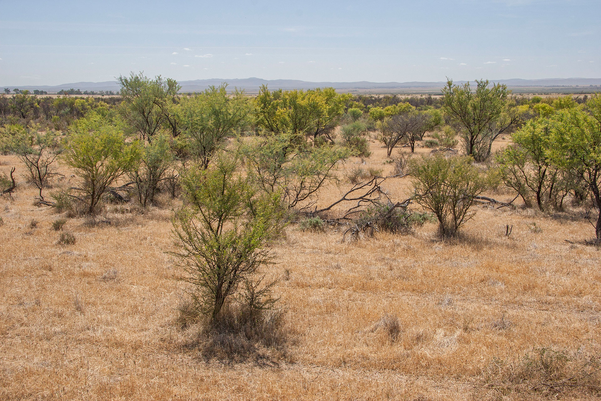 Crops fields turn to shrubland.