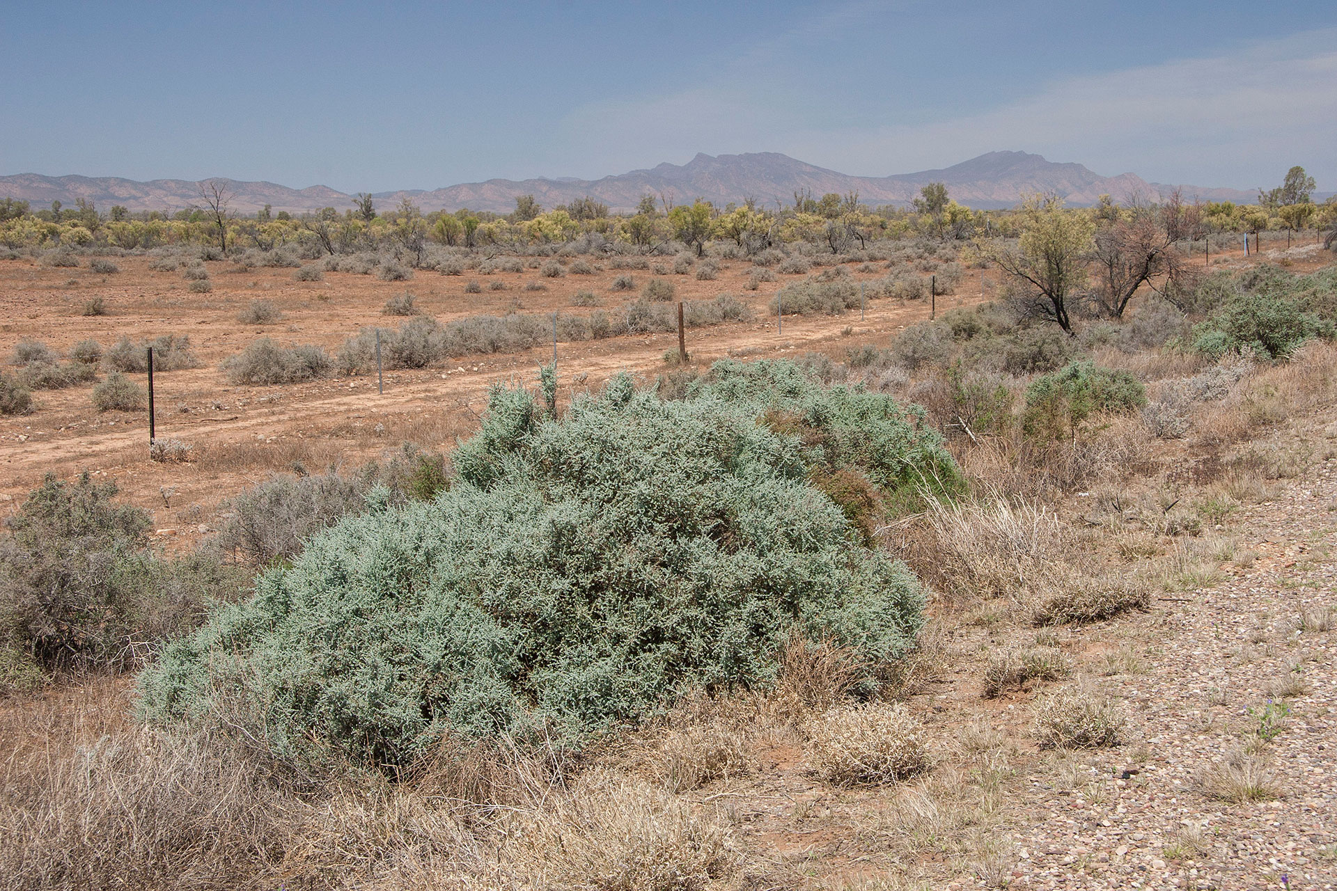 Patches of arid colours.