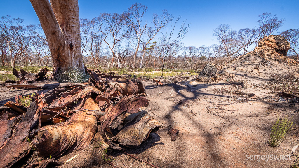 Traces of bushfires.