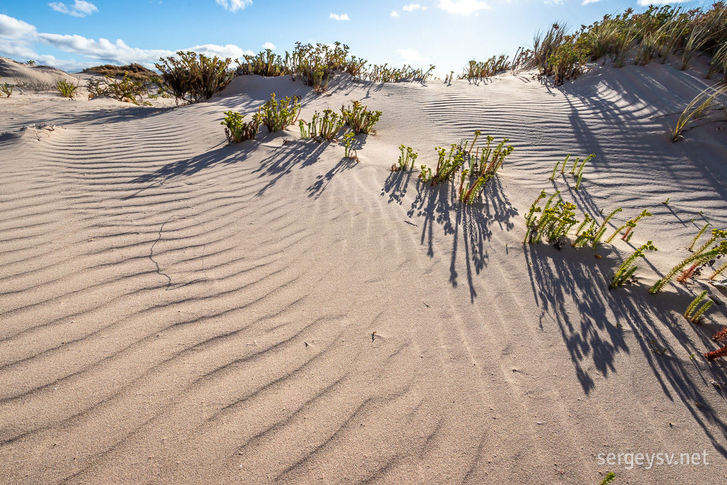 I love the ripples on the dunes.